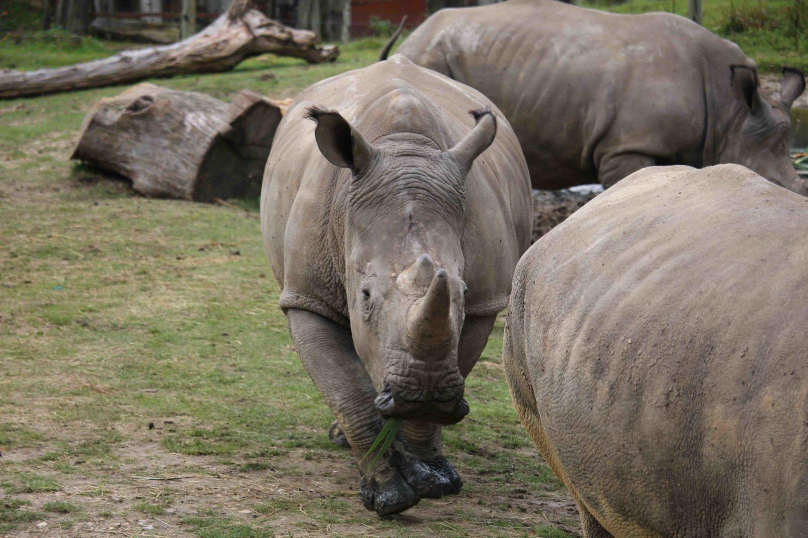 Un drame au Zoo de Thoiry